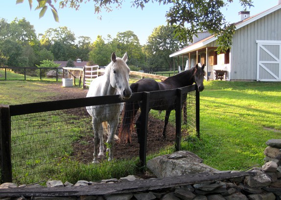 2-Horses-&-BarnWKa